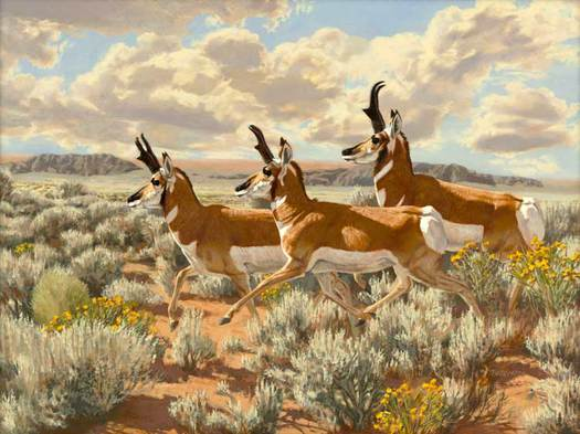 Pronghorn Run - Tom Beecham