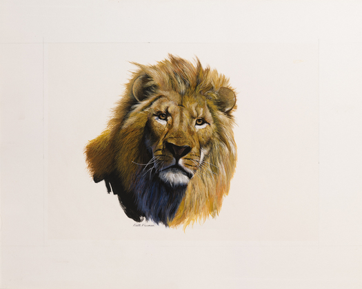 Lion - Keith Freeman